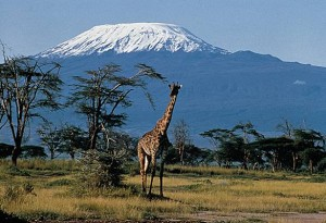 kilimandjaro-et-girafe-jpg